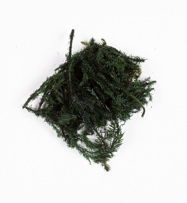 Woreczek z zielonymi gałązkami nr 1220 (10 gr)